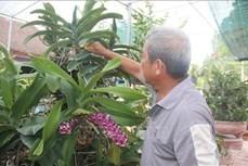 Làm giàu từ trồng hoa lan ở Bà Rịa - Vũng Tàu