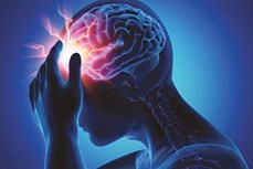 Phát triển thành công loại gel từ tế bào gốc giúp điều trị tổn thương não bộ
