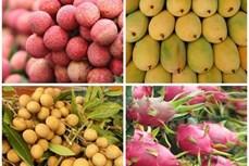 2019年越南水果出口额达38.5亿美元