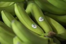 黄英嘉莱集团从柬埔寨北部地区出口第一批香蕉
