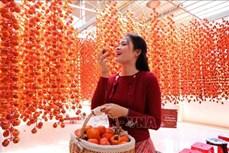 Hồng treo gió - Đặc sản thu hút khách du lịch Đà Lạt