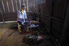 Đồng bào dân tộc Cống ở xã Pa Thơm đón Tết hoa mào gà