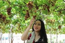Ninh Thuận hướng đến phát triển bền vững du lịch nông nghiệp
