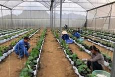 越南种植业力争2019年出口额达210亿美元