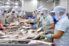 越南查鱼迎来新机遇