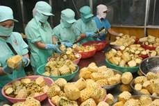 2019年越南农产品出口总额有望达到420亿至430亿美元