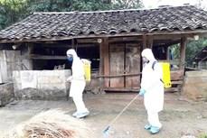 越南全国各省市积极开展非洲猪瘟疫情防控布置工作