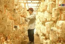 Lào Cai tích cực hỗ trợ phụ nữ khởi nghiệp