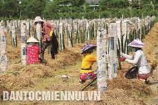 Tiền Giang: Phát triển cây trồng thích ứng biến đổi khí hậu trên vùng nhiễm mặn