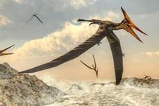 Phát hiện hóa thạch thằn lằn bay đầu tiên tại Cuba