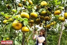 九龙江三角洲地区加强对接推动旅游发展