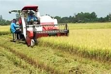 Giải pháp đẩy mạnh tiêu thụ lúa gạo trong dân