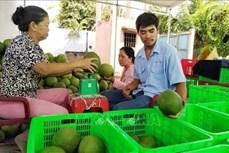 Bà Nguyễn Thị An Thuận dựng nghiệp từ cây bưởi da xanh