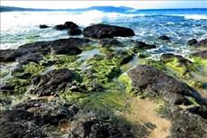 Bãi rêu xanh tuyệt đẹp bên bờ biển Lệ Thủy