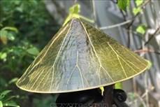 Những sản phẩm độc đáo nâng giá trị loài sen ở Huế