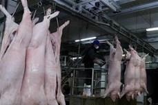 12个非洲猪瘟疫区30天来不出现新发病例