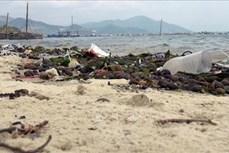 Nguy cơ tôm hùm ở Phú Yên chết hàng loạt do ô nhiễm môi trường nuôi