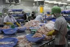 努力提高越南优质查鱼在中国市场上的竞争力