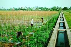 Kinh tế xanh trong xây dựng nông nghiệp và nông thôn mới