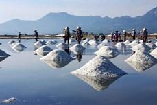 Nghề làm muối ở Ninh Thuận