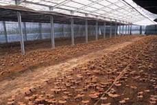 Ứng dụng tiến bộ khoa học công nghệ vào sản xuất và chế biến nấm Linh Chi