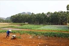 Hiệu quả từ các chương trình hỗ trợ phát triển nông nghiệp ở Sơn La