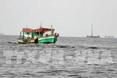 越南成立打击非法、不报告和不管制捕捞(IUU)国家指导委员会