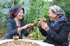 Thức uống quý của đồng bào Vân Kiều, Pa Kô vùng cao Quảng Trị