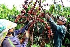 Xây dựng hệ thống thông tin mã số vùng trồng cà phê