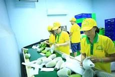 越南VinaT&T公司对美国出口71吨芒果