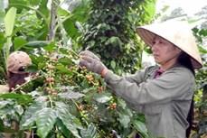 今年前5月农业贸易顺差近33亿美元