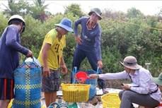 Kiên Giang xử lý các ổ dịch bệnh trên vùng nuôi tôm