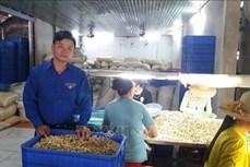 Chàng trai Nguyễn Văn Thắng khởi nghiệp thành công với mô hình sản xuất và chế biến hạt điều