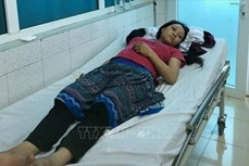 Cả gia đình người Mông nhập viện do ăn nấm độc ở Lai Châu