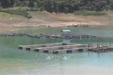 Nuôi cá lồng trên lòng hồ Hoà Bình cho thu nhập cao