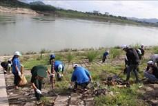 越南各地举行各类环保活动响应世界环境日