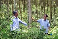 Thanh Hoá trồng rừng FSC giúp người dân miền núi giảm nghèo
