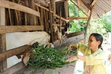 Vĩnh Long tập trung xây dựng các mô hình, công trình nhân đạo trợ giúp người nghèo