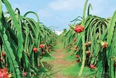 CPTPP: 越南农产品的机遇和挑战