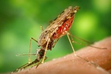 Giới chuyên gia cảnh báo chủng sốt rét kháng thuốc