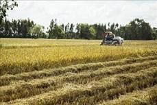 Kiên Giang triển khai chuỗi liên kết sản xuất lúa hữu cơ