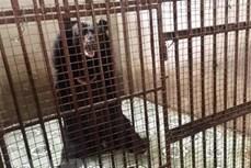 Cứu hộ động vật hoang dã qua đường dây nóng