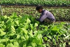 Liên kết sản xuất nông nghiệp theo hướng hữu cơ