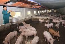 Bộ Nông nghiệp và Phát triển nông thôn khuyến cáo biện pháp chăn nuôi an toàn sinh học