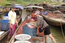 Phát triển mô hình chế biến nước mắm từ cá nước ngọt lòng hồ sông Đà