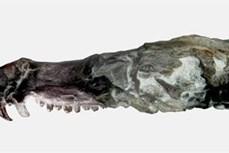 """Argentina phát hiện hóa thạch lớp Thú giống loài sóc trong """"Kỷ băng hà"""""""