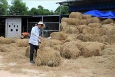 Giải pháp hữu hiệu xử lý rơm rạ sau thu hoạch ở Thừa Thiên - Huế