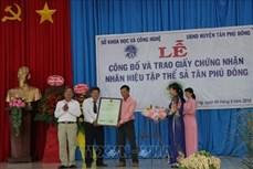Cấp chứng nhận nhãn hiệu tập thể cho cây Sả Tân Phú Đông, Tiền Giang