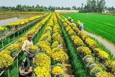 越南同塔省推动旅游与农业价值结合发展