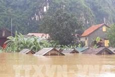 广平省:洪水造成经济损失超过4110亿越盾